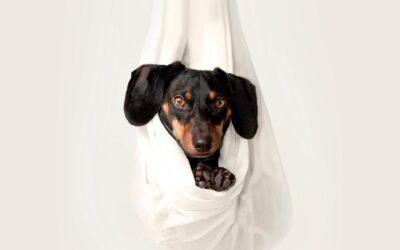 Dit kæledyr i trygge hænder ved Herning dyrlæge